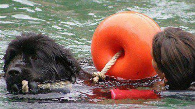 Fête de la mer 2015 - Chiens de sauvetage